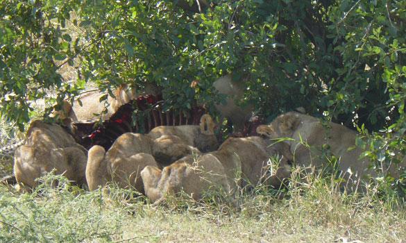 Baobabs im Tarangire Nationalpark